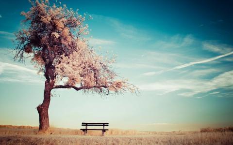 天空,云,树,长凳,地平线,心情,夏天