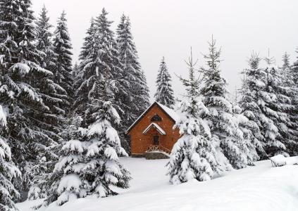 性质,喀尔巴阡,乌克兰,冬天,雪,Khutorok安静