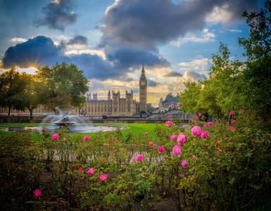 英国,伦敦,玫瑰,大本钟