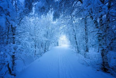 冬天,雪,路,美丽,挪威