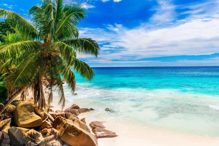 夏天,海洋,沙滩,石头,手掌,度假村,热带地区,天堂,休息,乐趣