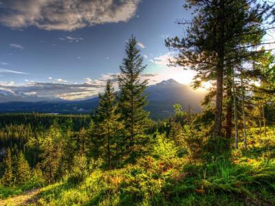 冷杉,丘陵,天空,山脉
