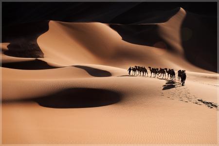 漫长的旅程,沙滩,骆驼,大篷车,照片,俊和的歌