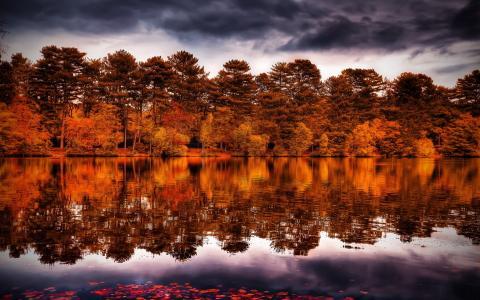 河流,树木,天空,云,反射
