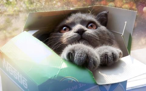 小猫,猫,盒子,可爱