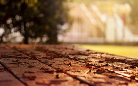 秋季壁纸,秋季壁纸,落叶,特写壁纸
