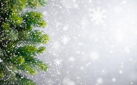 冬天,圣诞节,圣诞树,雪花,冬季,雪,雪,新年,圣诞