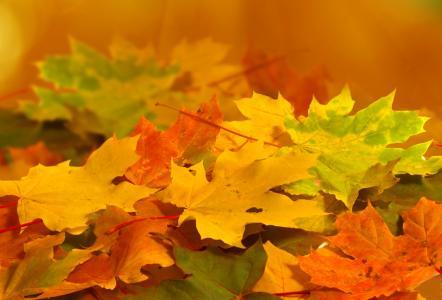 黄色,性质,叶子,绿色,秋季,橙色