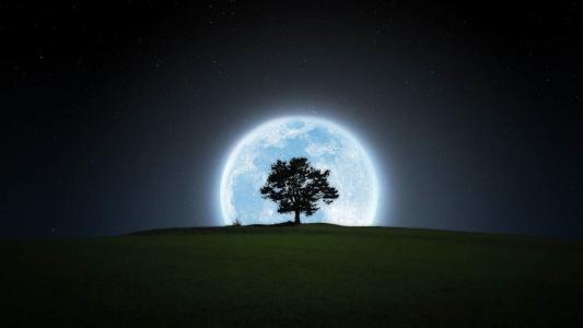 树,月亮,夜晚,星星,天空