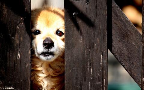 狗,篱笆,街道