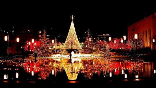 树,圣诞节,光,城市,夜