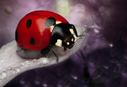 瓢虫,昆虫,宏,散景