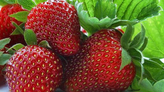 草莓,草莓,浆果,美味