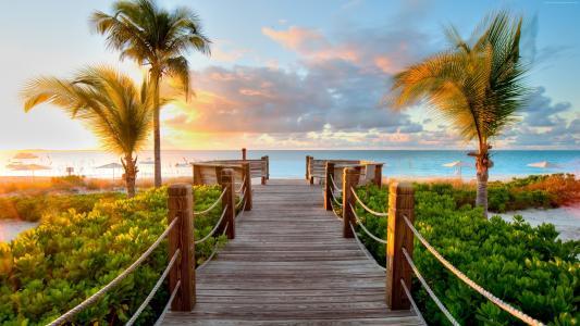 热带地区,加勒比海,加勒比海,海,湾,棕榈树,码头,板