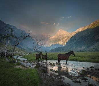春天,山,溪流,全景,马