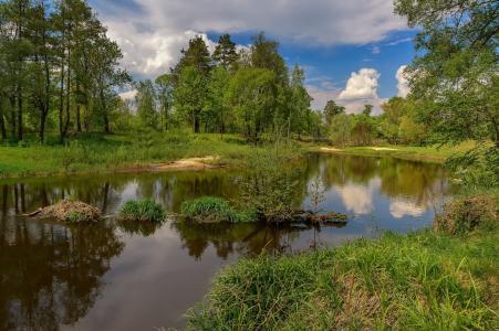 河,海滩,春天,树木,天空,云,反射,通过Julia Lapteva
