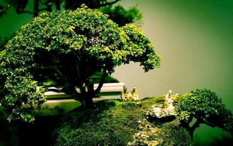 艺术,树,盆景,组成,数字