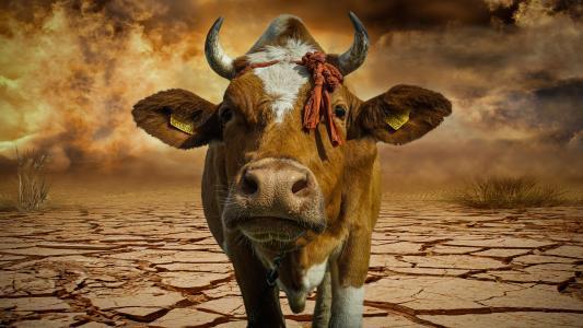 创造力,动物,牛,沙漠,牛角,羊毛