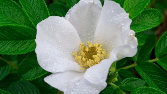 花,白,叶子,绿色,美容,滴,水