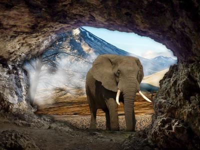 洞穴,大象,风景,photomanipulation