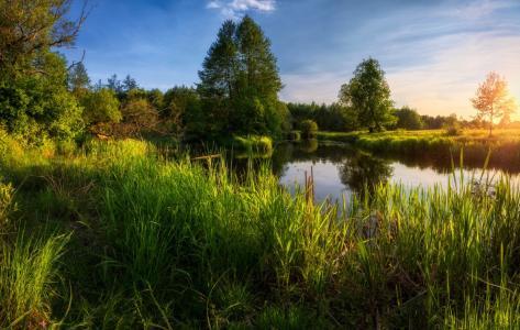 可以日落,池塘,绿化,莎草,照片,米哈伊尔·库什纳