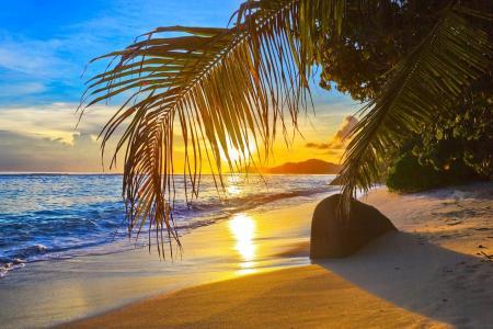 海滩,沙滩,石头,棕榈树,海洋,太阳,云