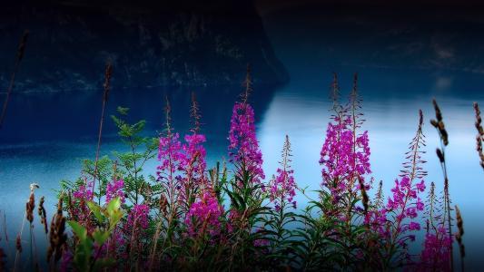 谷,河,鲜花