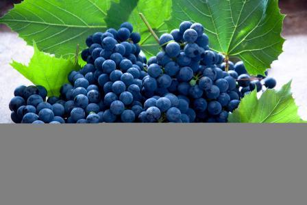 葡萄,水果,蓝色