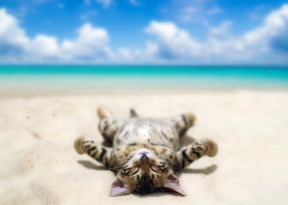 猫,照片,创意,积极,海滩