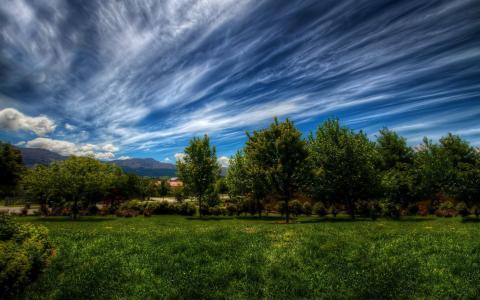场,树,草,路径,天空,云,太阳