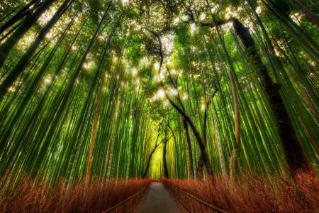 绿色,竹园,小径