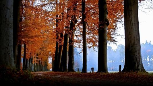 树,叶秋,忧郁,秋天