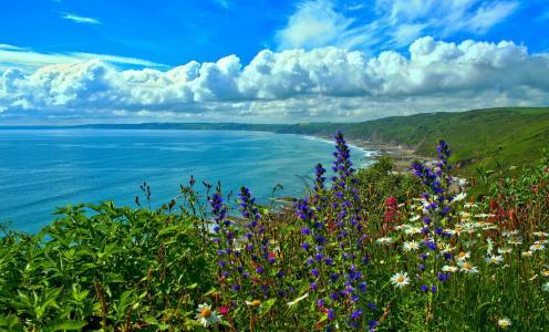 自然,夏天,海,湾,海岸,英格兰,野花,云