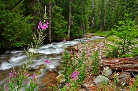 自然,森林,树木,花,河,石头,日志