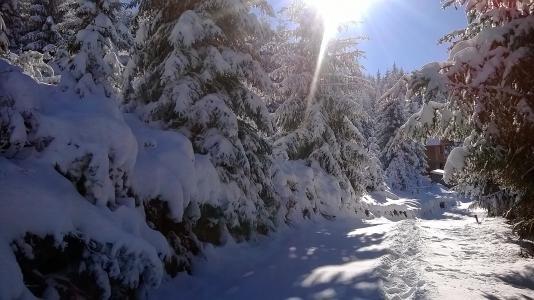 雪,snowdrifts,冷杉,曲目,冬天