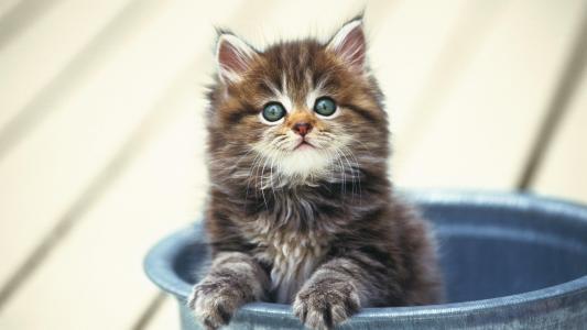小猫,小,毛茸茸的,在一个桶里