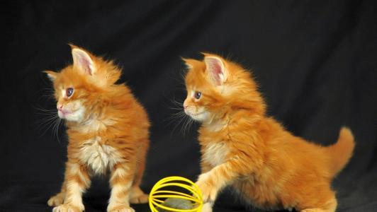 小猫,红色,游戏