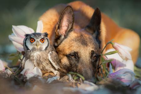 自然,鸟,猫头鹰,动物,狗,脸,鲜花,分支机构,玉兰