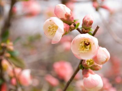 春天,鲜花,美女,彩虹的颜色,图片,壁纸