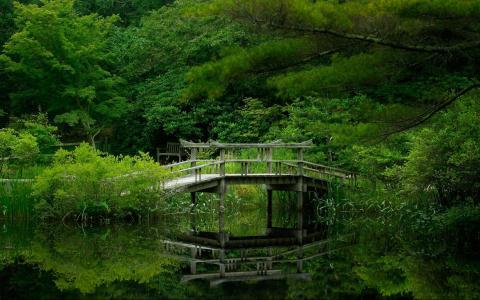 森林,绿色,湖泊,桥梁,树木