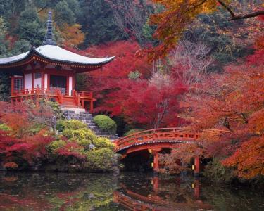 秋日在日本,公园,池塘,结构,桥梁,五颜六色的树叶