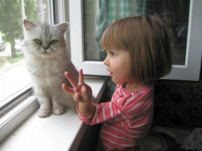 孩子,女孩,孩子,搞笑,人,幽默,猫,动物,看,窗口,街道