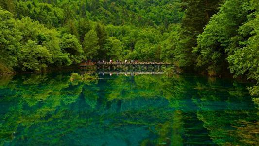 中国,湖,桥,森林,九寨沟四川,大自然