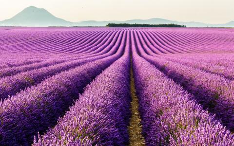自然,紫罗兰,山,美丽