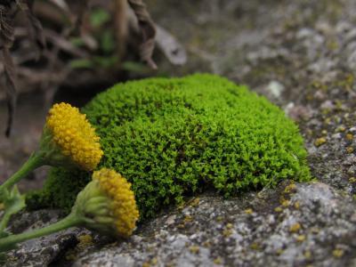 青苔,绿色,花,黄色