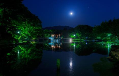 日本,公园,池塘,桥梁,树,夜,月亮,性质