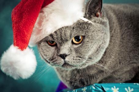 猫,新年,英国人,帽子,英国,帽子