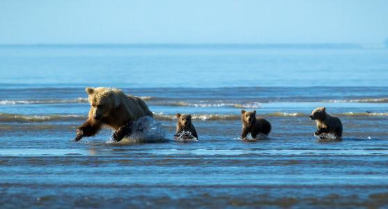 熊,家庭,照片,积极