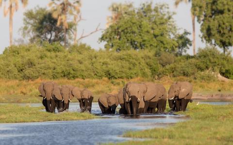 大象,非洲,浇水,野生动物,一群大象