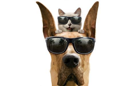 狗,猫,戴着眼镜